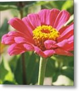Hot Pink Flower In Frankemuth Michigan Metal Print