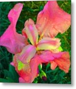 Hot Pink Iris Flower Metal Print