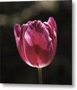 Hot Pink Tulip Squared 02 Metal Print