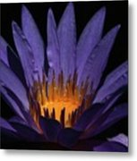 Hot Purple Water Lily Metal Print
