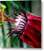 Hot Red Passion Metal Print