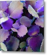 Hothouse Succulents Metal Print