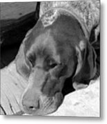 Hound Dog Metal Print