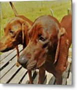 Hounds Metal Print