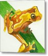 Hourglass Frog Metal Print