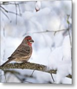 House Finch In Snow Metal Print