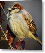 House Sparrow 1 Metal Print