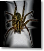 House Spider Metal Print