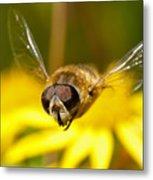 Hoverfly In Flight Metal Print