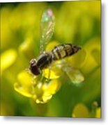 Hoverfly On Yellow Flower Metal Print