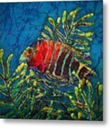 Hovering - Red Banded Wrasse Metal Print