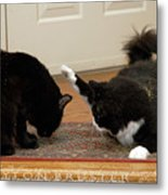 How Cat Fights Start Metal Print