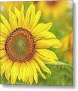 How Do You Dew, Sunflower Metal Print