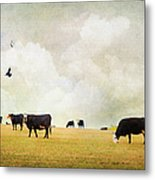 How Now Black Cow Metal Print