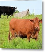 How Now Brown Cow Metal Print