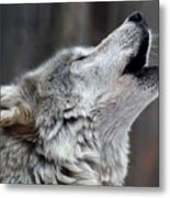 Howl Metal Print