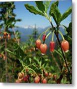 Huckleberry Flowers Atop Huckleberry Mountain In Glacier National Park Montana Metal Print