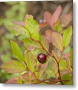 Huckleberry Metal Print by Idaho Scenic Images Linda Lantzy