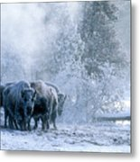 Huddled For Warmth Metal Print