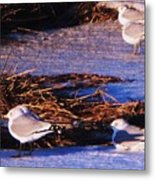 Huddling On A Winter Day  Metal Print