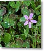Huge Beauty In A Small Wildflower Metal Print