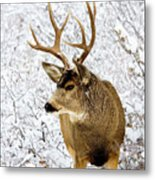Huge Buck Deer In The Snowy Woods Metal Print