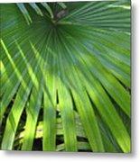 Huge Palm Leaf Metal Print