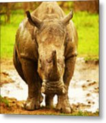 Huge South African Rhino Metal Print by Anna Om