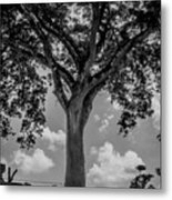 Huge Tree 12 Metal Print