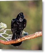 Huginn The Raven Metal Print