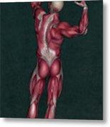 Human Anatomy 20 Metal Print