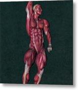 Human Anatomy 37 Metal Print