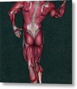 Human Anatomy 9 Metal Print