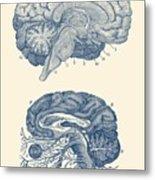 Human Brain - Central Nervous System - Vintage Anatomy Print Metal Print