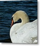 Humble Beauty Metal Print