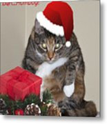 Humbug Metal Print by Cathy Kovarik