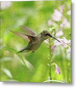Hummer And Obedient Plant Metal Print