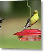 Hummer Vs. Finch 1 Metal Print