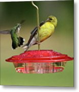 Hummer Vs. Finch 2 Metal Print