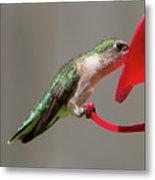 Humming Bird 10 Metal Print