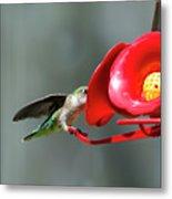 Humming Bird 6 Metal Print