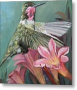 Humming Bird Anna Metal Print