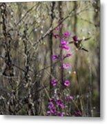 Humming Bird In Nature Metal Print
