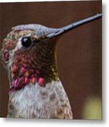 Hummingbird 16 Metal Print