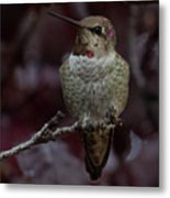 Hummingbird 17 Metal Print