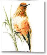 Hummingbird 2 Metal Print