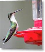 Hummingbird 33 Metal Print