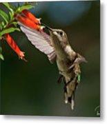 Hummingbird #5 Metal Print