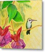 Hummingbird Amongst The Fuchsia Metal Print