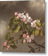 Hummingbird And Apple Blossoms Metal Print